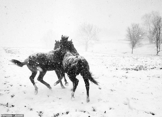 Alessandra Manzotti là nhiếp ảnh gia đã chụp lại cảnh đẹp hoang sơ này ở Ý bằngchiếc iPhone 5C, đây là hình ảnh chiến thắng ở hạng mục đen trắng.