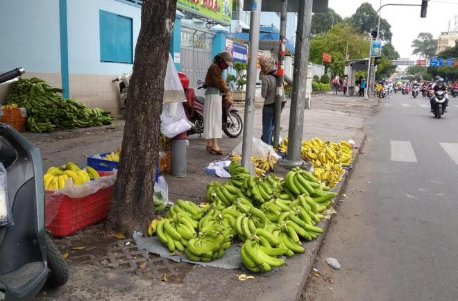 Chuối già Nam Mỹ khổng lồ xổ rẻ đầy đường - 1