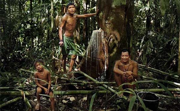 Lạ lùng bộ lạc thường chỉ ngủ 30 phút, không có số đếm sống trong rừng thẳm - 1