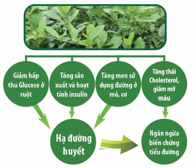 Giải mã sản phẩm được tin dùng số 1 Việt Nam trong dòng thảo dược chiết xuất từ cây thìa canh - 1