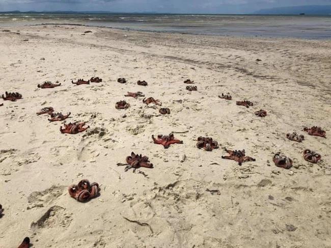 Dân mạng chỉ trích mạnh mẽ việc sống ảo khiến sao biển chết khô - 1