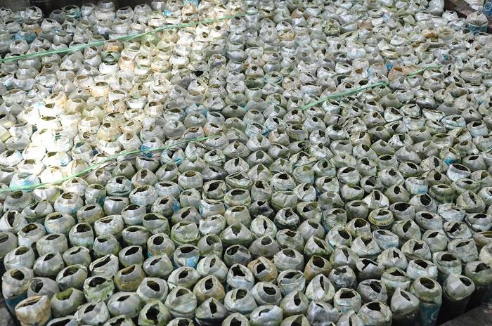 Nuôi loại cá tí hon trong chai phế liệu, lão nông Hà Nội thu về hàng trăm triệu đồng - 1