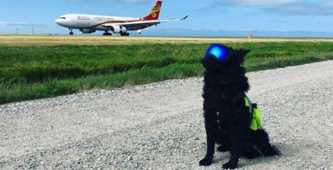 Chó xâm nhập sân bay Cam Ranh, máy bay phải bay vòng chờ hạ cánh - 1
