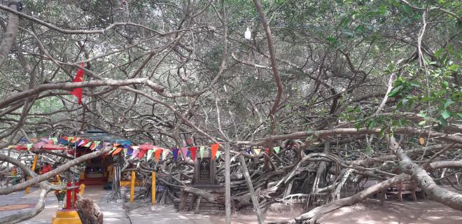 Ngất ngây trước vẻ đẹp yên bình của rừng gừa ở miền Tây - 1