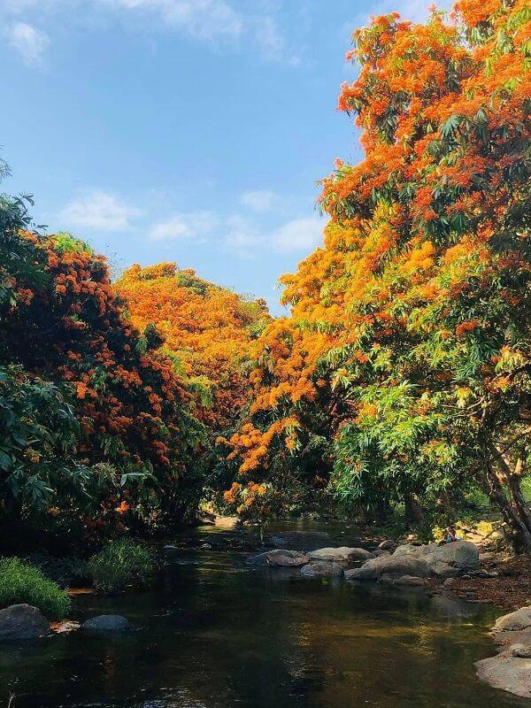 """Hoa trang rừng nở rộ sau nhiều năm, suối Tà Má trở thành điểm """"check-in"""" mới của giới trẻ - 1"""