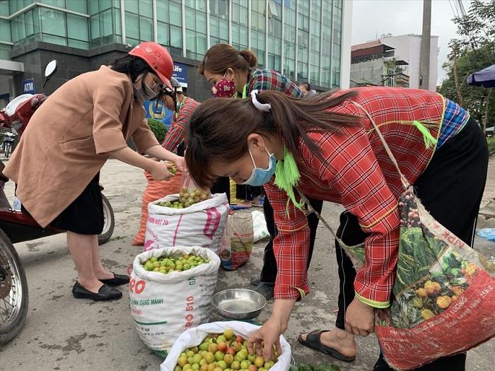 Giải cứu mận cơm ở Lạng Sơn - 1