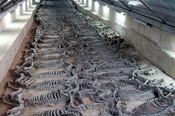 Hãi hùng cách hiến tế 600 chiến mã trong lăng mộ vua Trung Hoa - 1