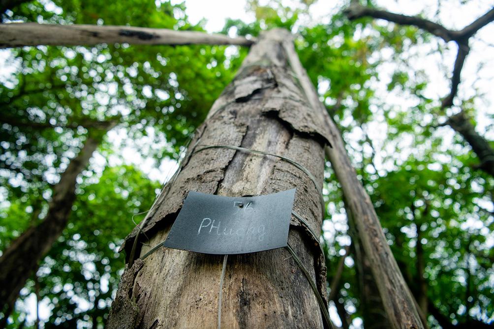 Hàng cây cổ thụ đường Kim Mã sau 5 năm đánh chuyển: Sống dở, chết dở, không ai chăm sóc - 11