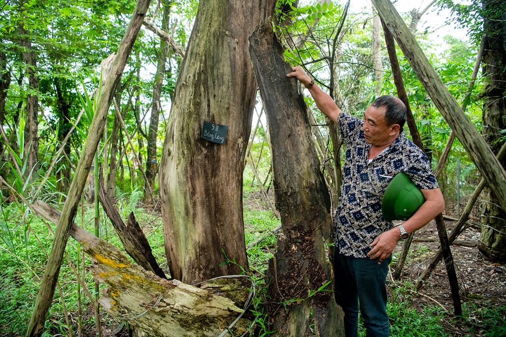 Hàng cây cổ thụ đường Kim Mã sau 5 năm đánh chuyển: Sống dở, chết dở, không ai chăm sóc - 4