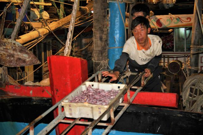 Ngư dân Nghệ An thu hàng trăm triệu mỗi chuyến từ mực luộc tươi trên tàu - 1