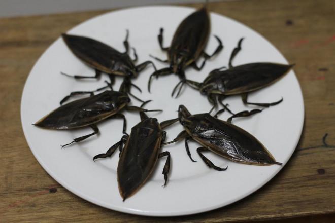 Đại gia Việt chi 3,5 triệu đồng để ngâm lọ mắm côn trùng nhìn giống gián - 1