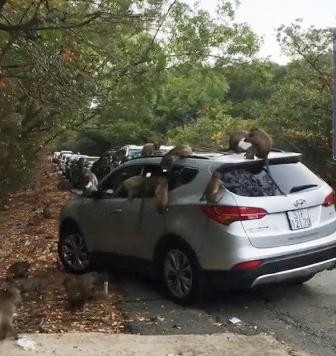Hàng chục chú khỉ đại náo ôtô quên đóng cửa ở Cần Giờ - 1