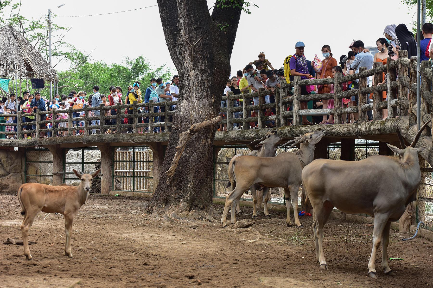 Người dân ùn ùn đi chơi lễ, toát mồ hôi chờ mua vé vào cổng Thảo Cầm Viên - 9