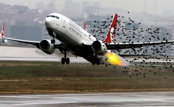 Chim va làm vỡ ống dầu thuỷ lực máy bay - 1