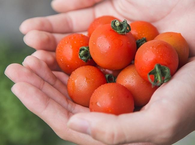 Cà chua tí hon được trồng tại Việt Nam có giá nửa triệu đồng/kg có gì đặc biệt? - 1