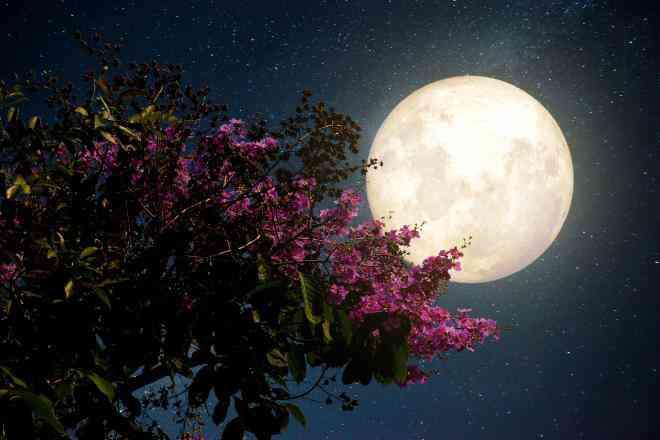 """Đêm nay và mai, Việt Nam chiêm ngưỡng """"siêu trăng hồng"""" kỳ ảo - 1"""