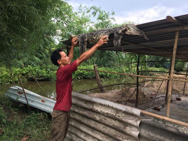 Ớn lạnh người dân bắt được nhiều cá sấu ở Bình Chánh - 1