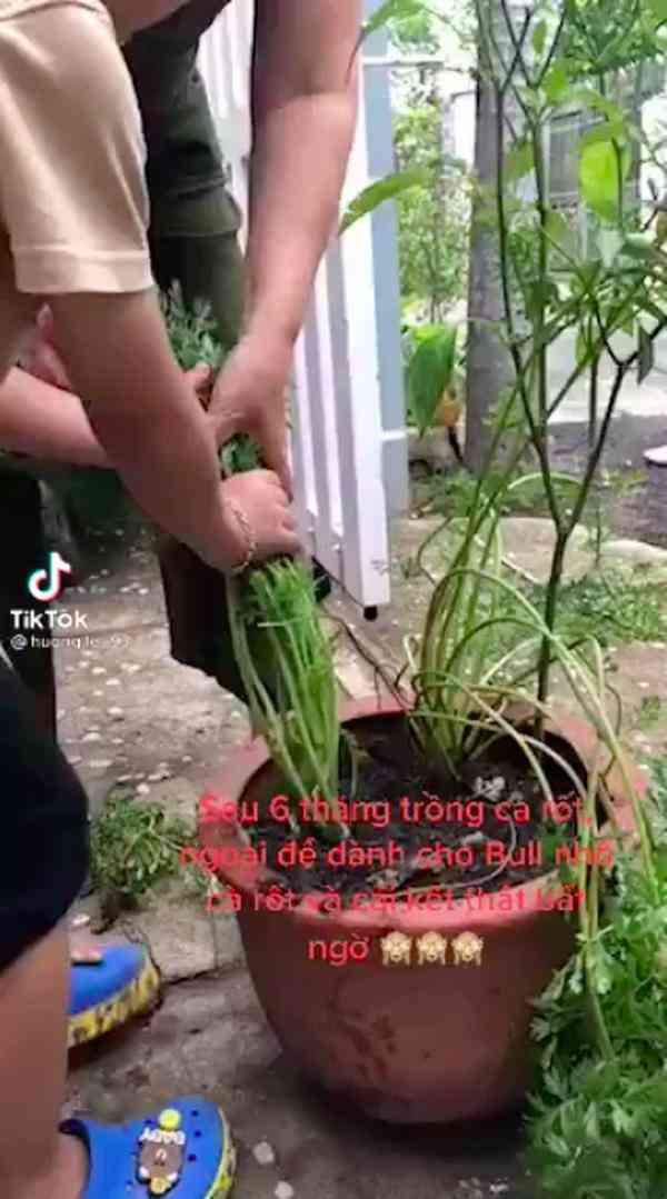 Hai bà cháu trồng cây cà rốt suốt 6 tháng trời, thành quả khiến cư dân mạng chỉ biết ôm bụng cười ngặt nghẽo - 1