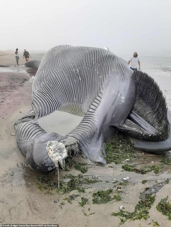 """Cận cảnh xác cá voi xanh dài 18m lần đầu trôi dạt bờ biển châu Phi, cách xa """"nhà"""" 8.000km - 1"""