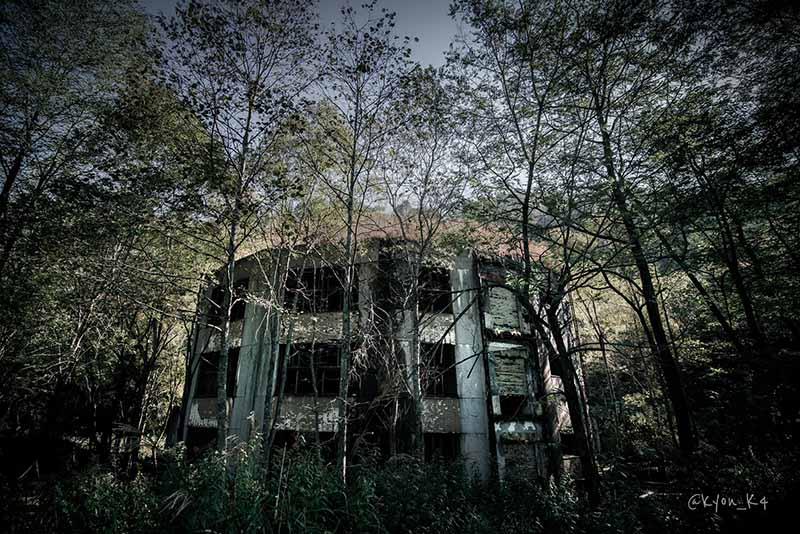 Ngôi trường bỏ hoang suốt 47 năm, bị cây cối nuốt chửng, khung cảnh đầy ma mị - 3