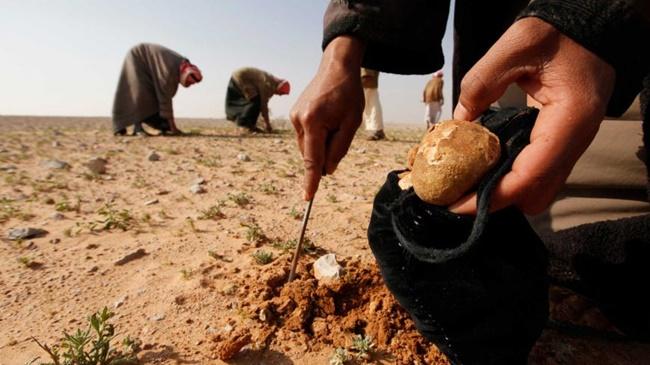 Thành phố Samawa, Iraq nằm cách Baghdad 265km về phía nam. Ngoài nổi tiếng với các vườn nho, vườn cây ăn quả, dệt thảm thì nơi đây còn có nấm cục giữa sa mạc khô cằn.