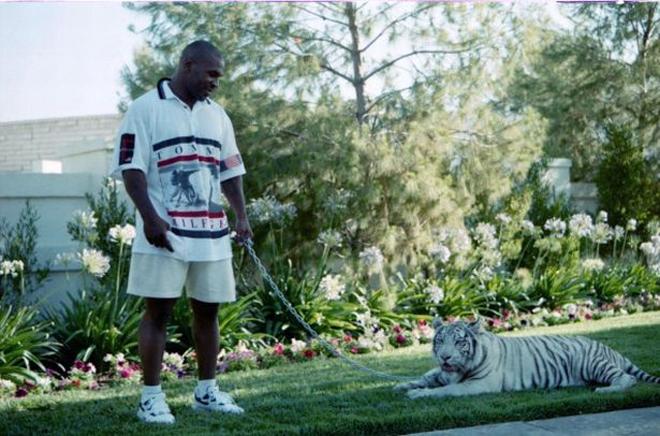 Mike Tyson cho hổ ở biệt thự 138 tỷ đồng vẫn bị cắn nhập viện - 1