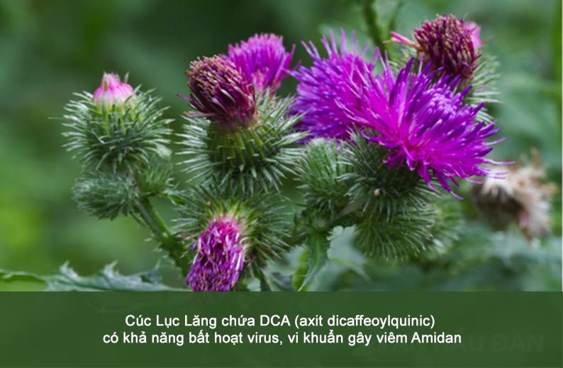 Bất ngờ trước công dụng của thảo dược hỗ trợ điều trị viêm Amidan cho bé - 1
