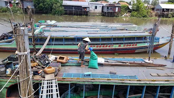 Kỳ lạ: Hàng ngàn con cá lũ lượt kéo đến bến sông ở An Giang, quyết không rời đi - 1