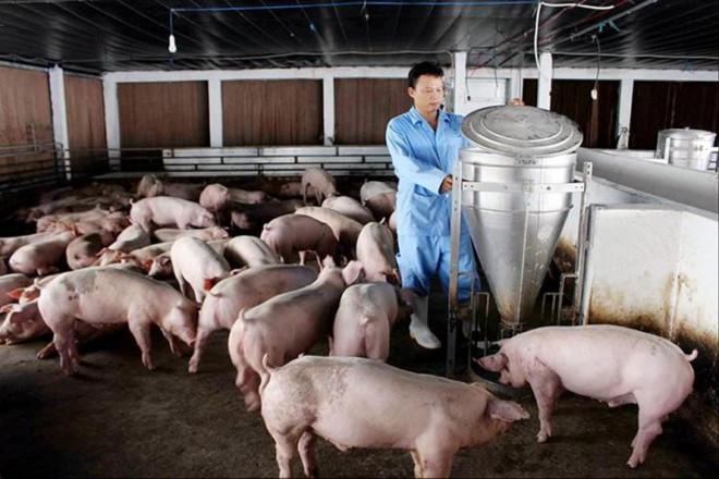 Giá thức ăn chăn nuôi tăng cao: Nông dân lỗ nặng - 1