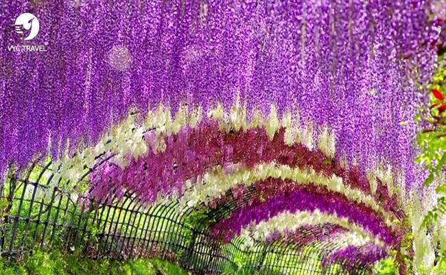 Những loại hoa này có màu sắc rực rỡ và vẻ đẹp quyến rũ nhưng thực tế, chúng lại chứa chất kịch độc có thể gây chết người.