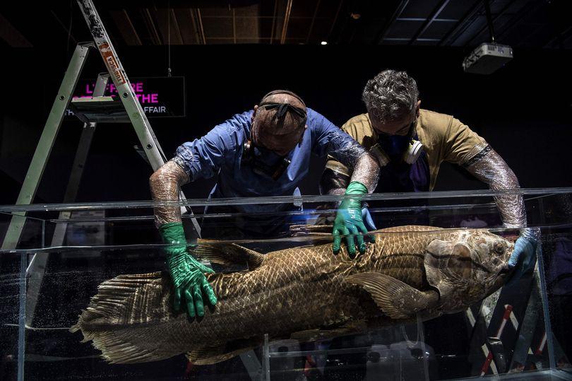 Loài cá sống cùng thời khủng long cách đây 420 triệu năm bất ngờ tái xuất - 1