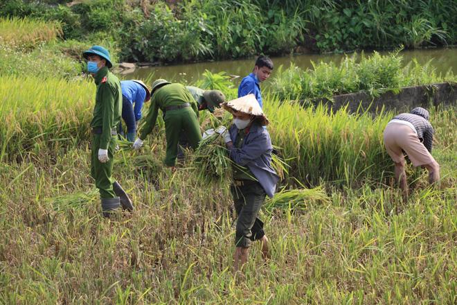 Công an lội ruộng gặt lúa giúp người dân F1, F2 đang phải đi cách ly vì dịch COVID-19 - 1