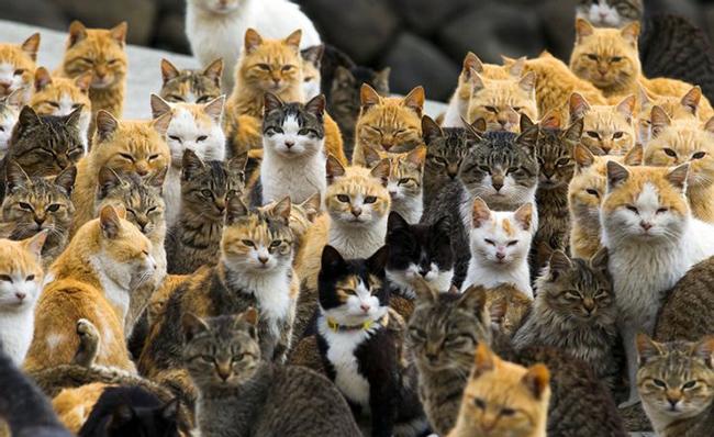 Aoshima - Đảo mèo: Đảo Aoshima rất nổi tiếng ở Nhật Bản bởi những cư dân mèo sinh sống ở đây còn đông hơn người. Bởi có tới hơn 100 con mèo trong khi chỉ có vài chục người, đảo Aoshima còn có tên gọi là đảo Mèo.