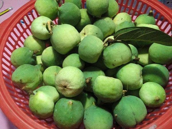 Loại quả rừng nhìn như quả sung, dân lấy hạt đem bán 400.000 đồng/kg - 1