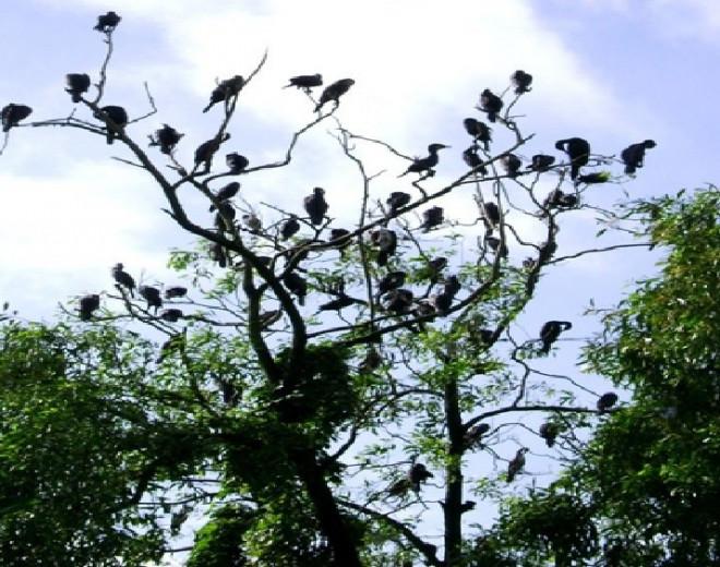 Vườn chim Cà Mau: Điểm du lịch sinh thái trong lòng thành phố - 1