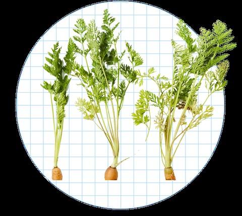 9 bộ phận rau củ thường xuyên bị bỏ đi có thể làm thành món ăn vừa ngon vừa bổ - 1
