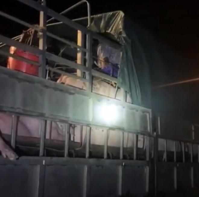 Gần 20 người trốn trên xe tải chở lợn thông chốt kiểm soát dịch Covid-19 - 1