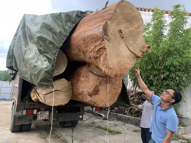 Chuyện lạ về nguồn gốc gỗ cổ thụ bị bắt giữ - 1