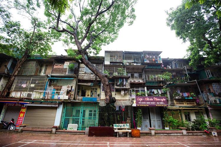 """Kỳ lạ kiến trúc """"cây mọc xuyên nhà"""" tại khu tập thể cũ ở Hà Nội - 1"""