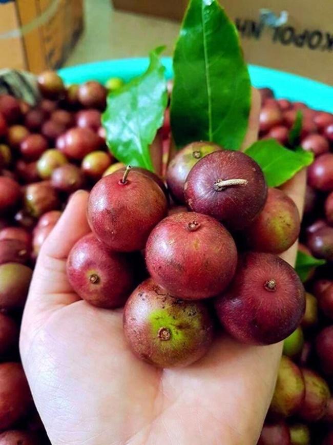 Nhìn bên ngoài hình dáng của chúng như quả cherry. nhưng đây là loại quả dân dã một thời tuổi thơ ai cũng biết.