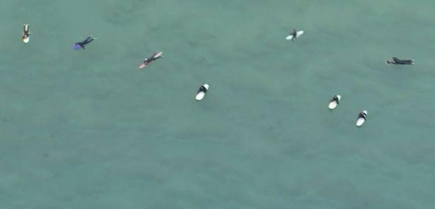 Clip: Thót tim đàn cá mập bơi xung quanh người lướt sóng rình mồi mà không ai hay biết - 1