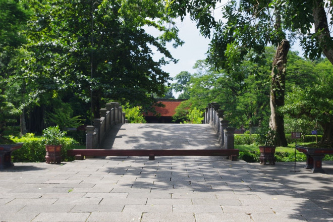 """Chuyện kỳ bí về """"cây lim hoá thân"""" và """"cây ổi cười"""" ở đất thiêng Lam Kinh - 1"""