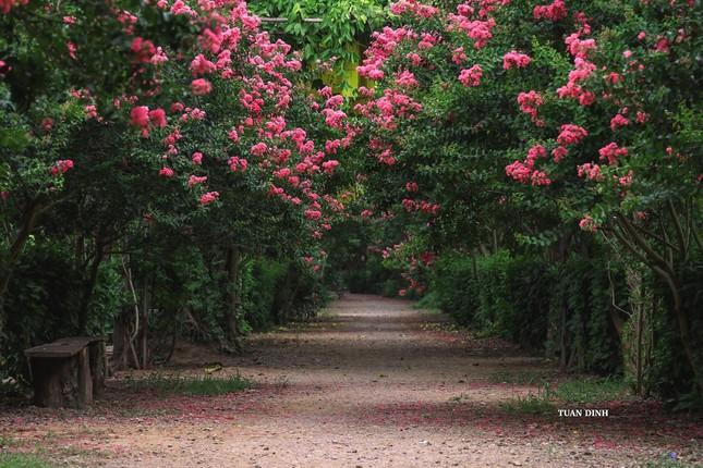 """Hóa thân thành """"nàng thơ"""" lạc bước trong khu vườn tường vi đẹp như tranh vẽ ở Hà Nội - 1"""