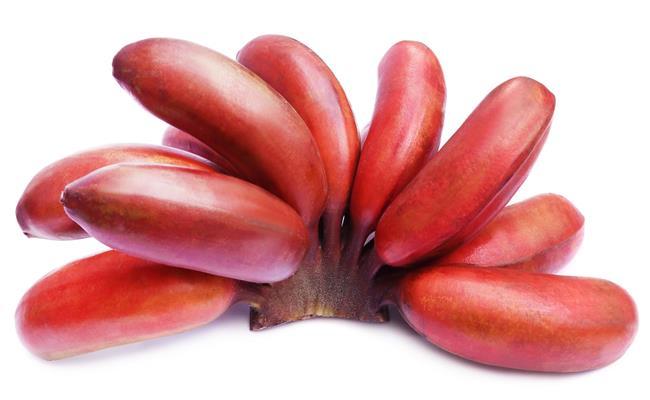 Ngoài chuối xanh và đen, trên thế giới còn có loại chuối có màu đỏ bắt mắt - chuối Dacca. Chúng có xuất xứ từ Australia.