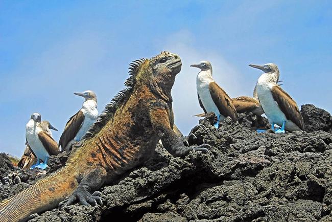 Quần đảo Galápagos, Ecuador: Động vật hoang dã trên quần đảo Galápagos khiến trẻ em vô cùng thích thú. Các bé có thể đigiữa những con rùa khổng lồ, ngắm những con chim đậu cách chúng chỉ vài mét, và tung tăng xung quanh lànhững con sư tử biển con vui tươi.