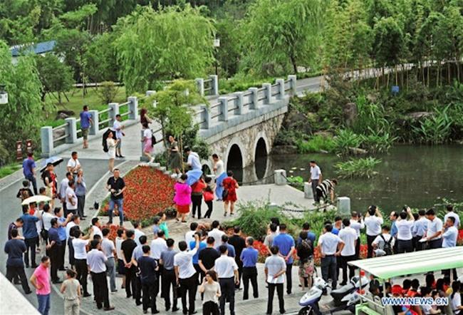 Ngày nay, núi Thiên Mục là một ví dụ về thảm thực vật tươi tốt ở Yucun, với những cánh rừng tre bạt ngàn.