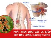 Tin tức sức khỏe - Thoát đau lưng, gai đốt sống không cúi nổi nhờ cách lạ ở Phú Thọ