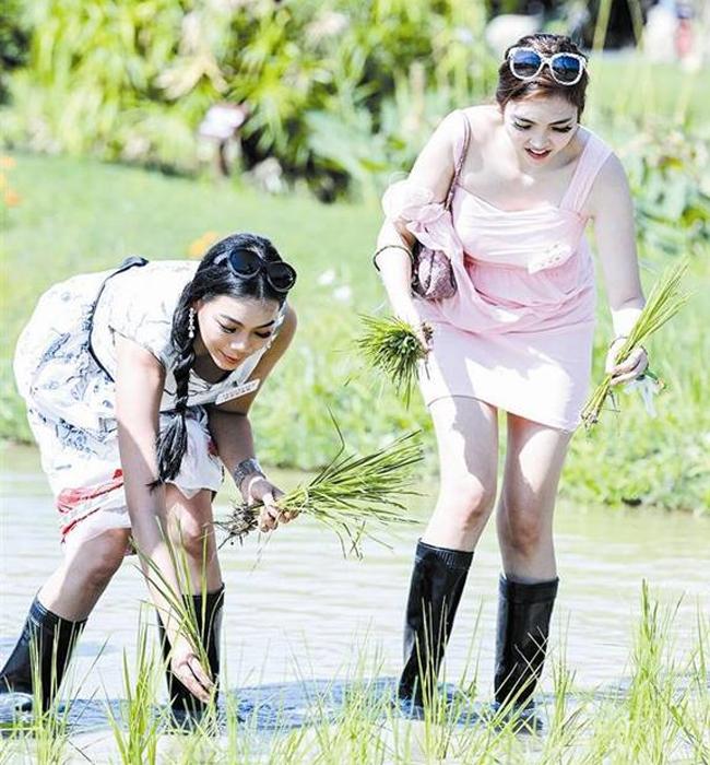 Các thí sinh Miss World mặc váy, đi ủnghào hứng học cấy lúaCông viên quốc gia lúa Tam Á ở đảo Hải Nam, Trung Quốc.