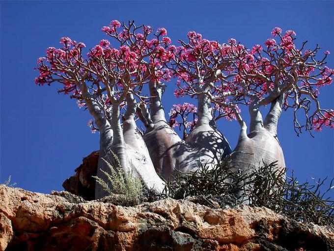 Lóa mắt với 10 hiện tượng thiên nhiên ấn tượng nhất hành tinh