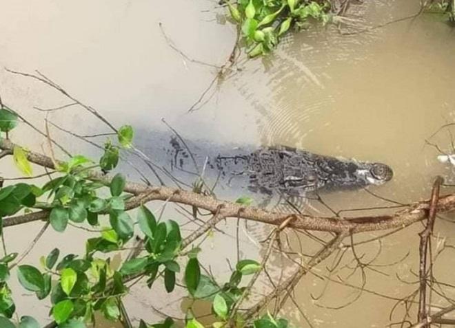Sự thật thông tin cá sấu xổng chuồng ra sông sau trận lụt lịch sử ở Hải Phòng - 1